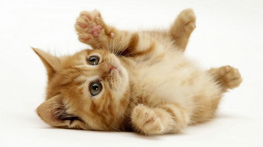 猫猫也搬屋