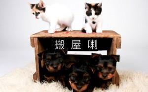 如何化解寵物的『搬屋後遺症』?