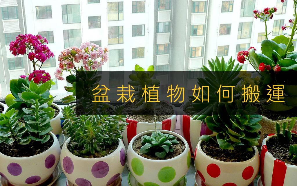 盆栽植物如何搬運