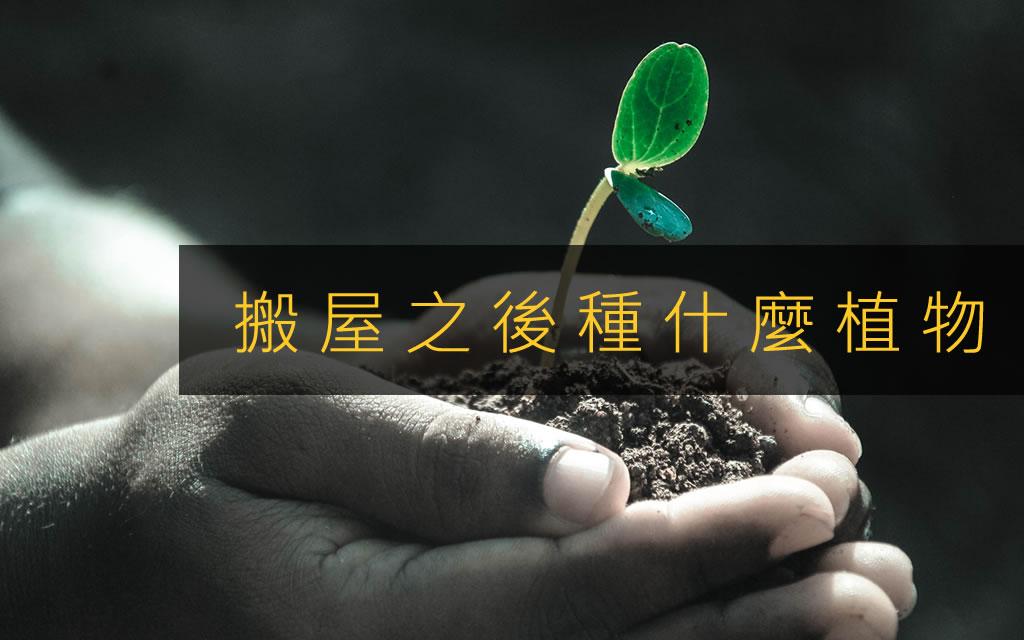 搬屋之後種什麼植物?